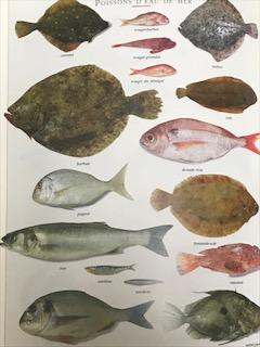 赤身魚と白身魚の特徴や違いは?味や食感で適した料理方法は?